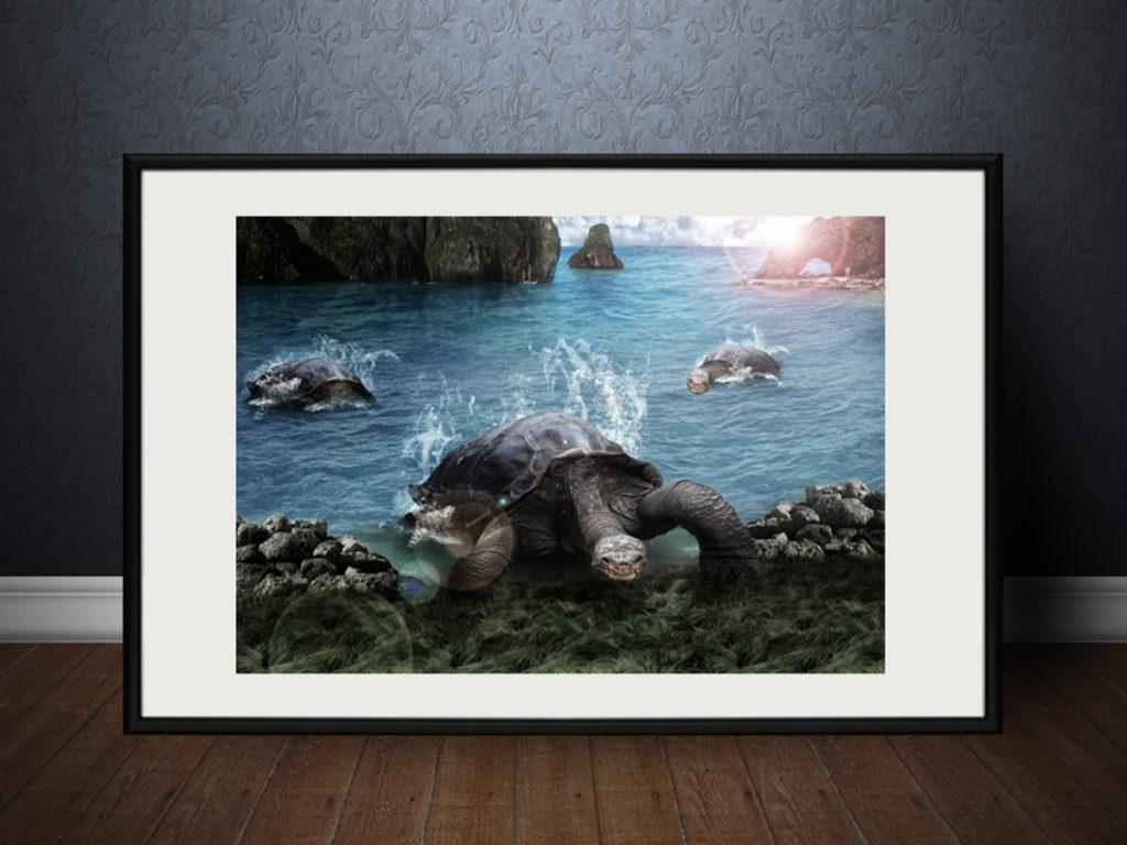 Fotomanipulace | Želvy