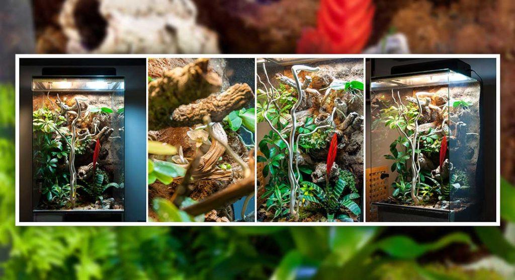 Výroba tropického vlhkého skleněného vivária
